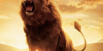 Lions Roars